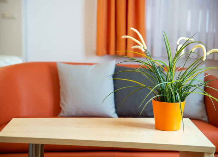 Couch - Clivia